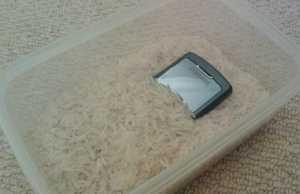 Rice on wet smartphone
